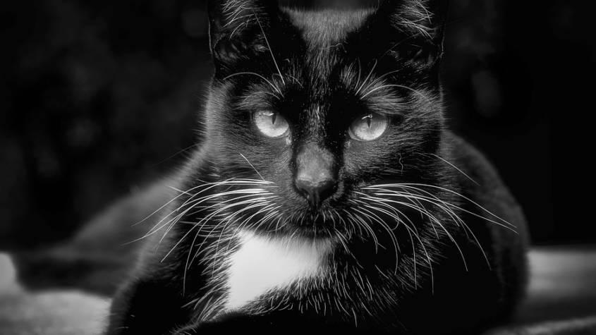 cat-2794982_960_720-845x475.jpg